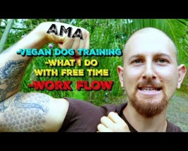 AMA: Vegan Dog Training + Travel Advice + My Work Flow