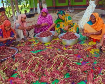 100% Pure VEGAN Recipe – 100 KG Red Long Bean Mixed Vegetables Hodgepodge Cooking By Village Women